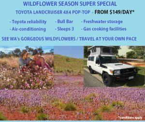 wa wildflowers